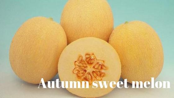 Autumn sweet melon varieties