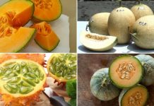 Different Types of Melon Varieties