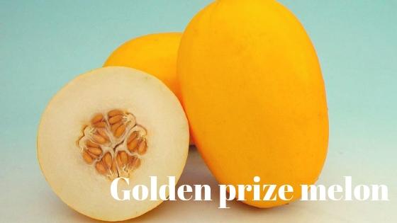 Golden prize melon varieties