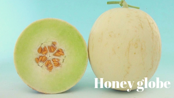 Honey globe varieties