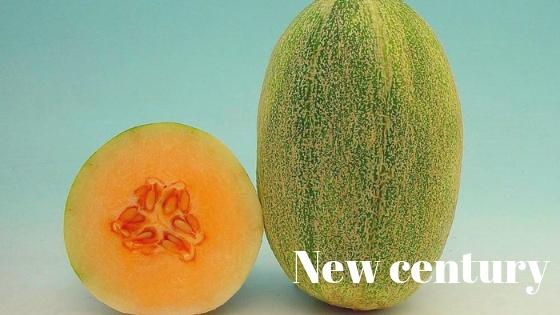 New century melon varieties