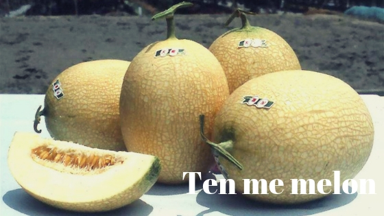 Ten me melon varieties