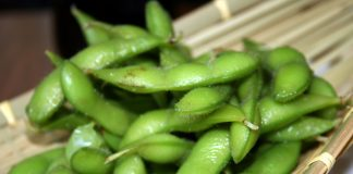 growing edamame (beans on branches)