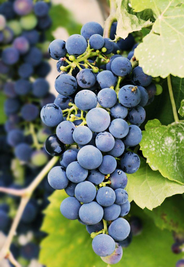 carmenere grape