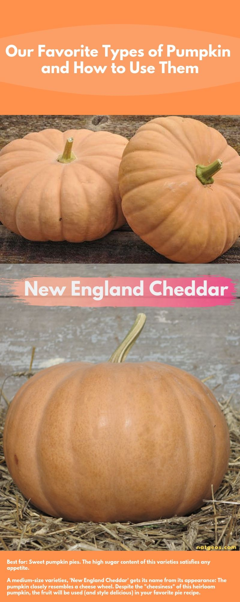 Our Favorite Types of Pumpkin and How to Use Them; New England Cheddar