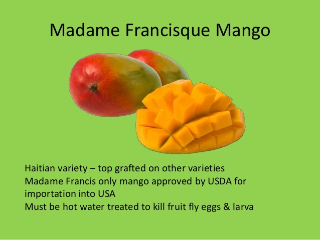 Madame francisque mango