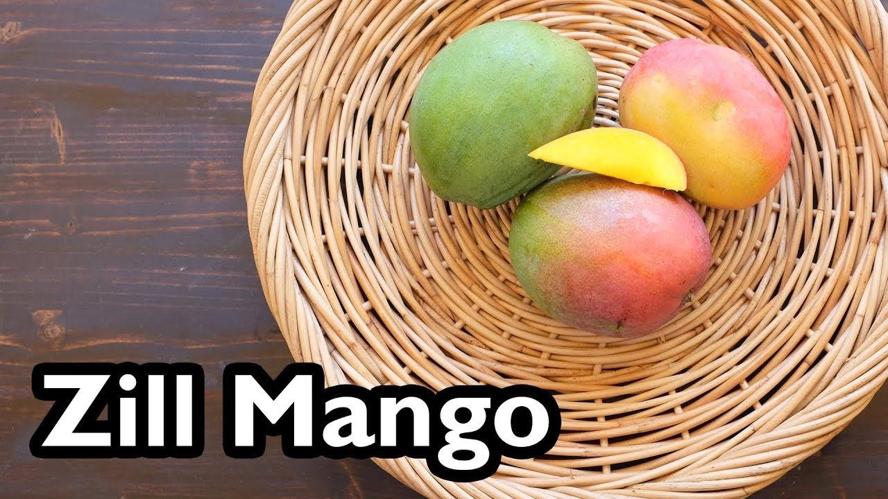 Zill mango