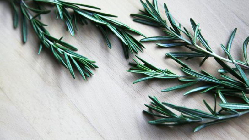 This is how ornamental plants Rosemary look a like