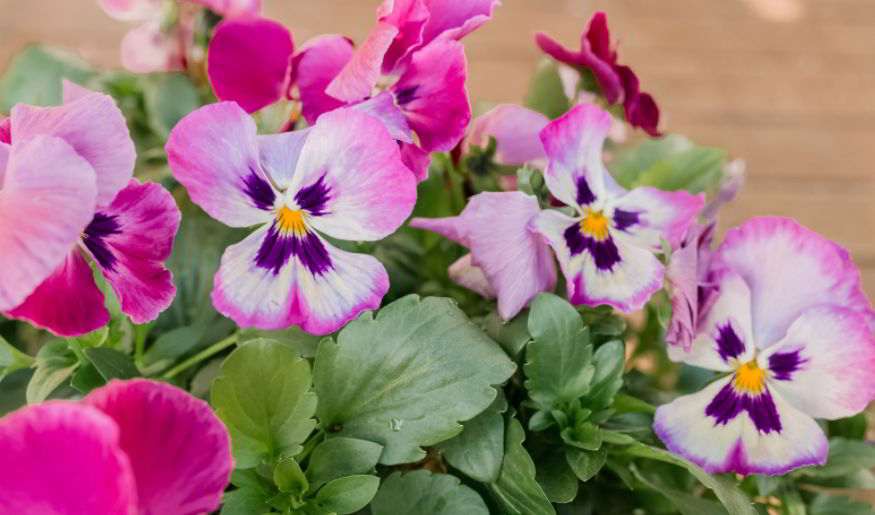 Pansy flower ideas