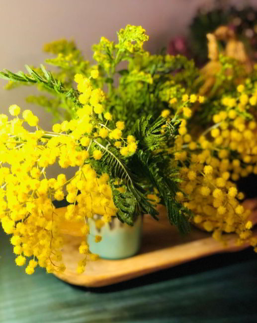 mimosa flower meaning