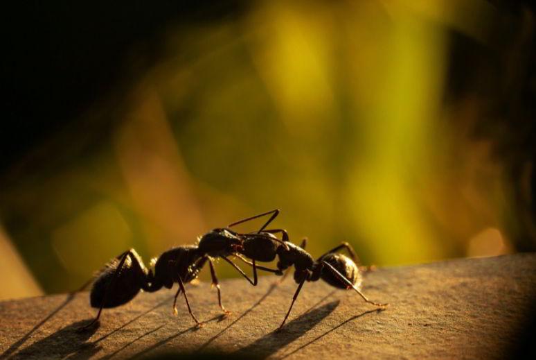 ant 3 Letter Animals