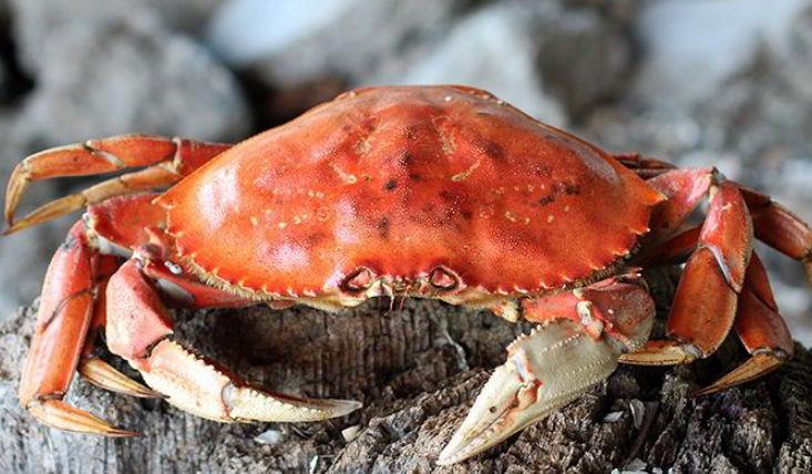 Crabs are decapod crustaceans