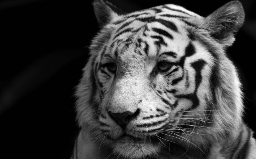 Black and White Animals in The World